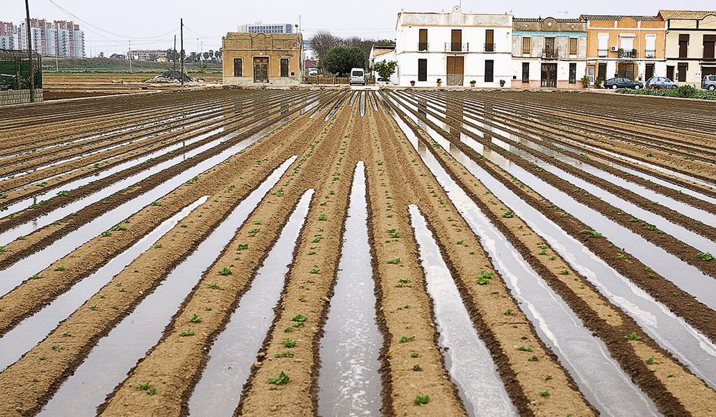 EL Regadío histórico de l'Horta de València, Patrimonio Agrícola Mundial