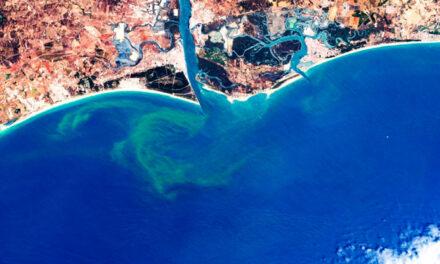 Nuevo método para captar floraciones de algas nocivas