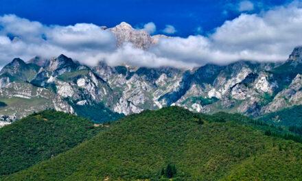 La supervivencia de las plantas de alta montaña