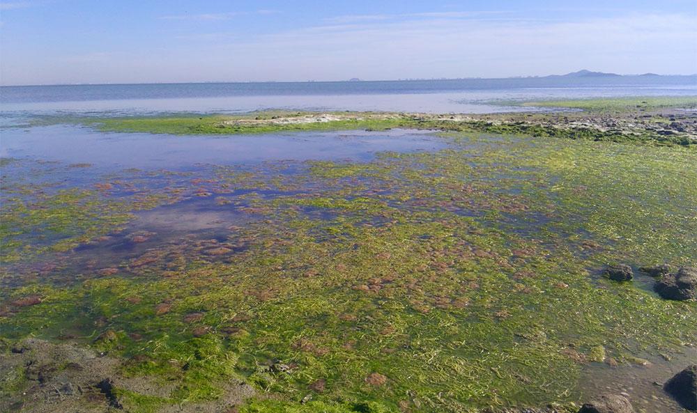 Mar Menor con claros síntomas de eutrofización